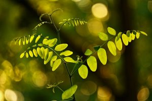 leaves-3627259_by_MabelAmber_pixabay_lizenz_cc0