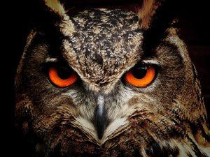 owl-chraecker_pixabay_lizenz_cc0